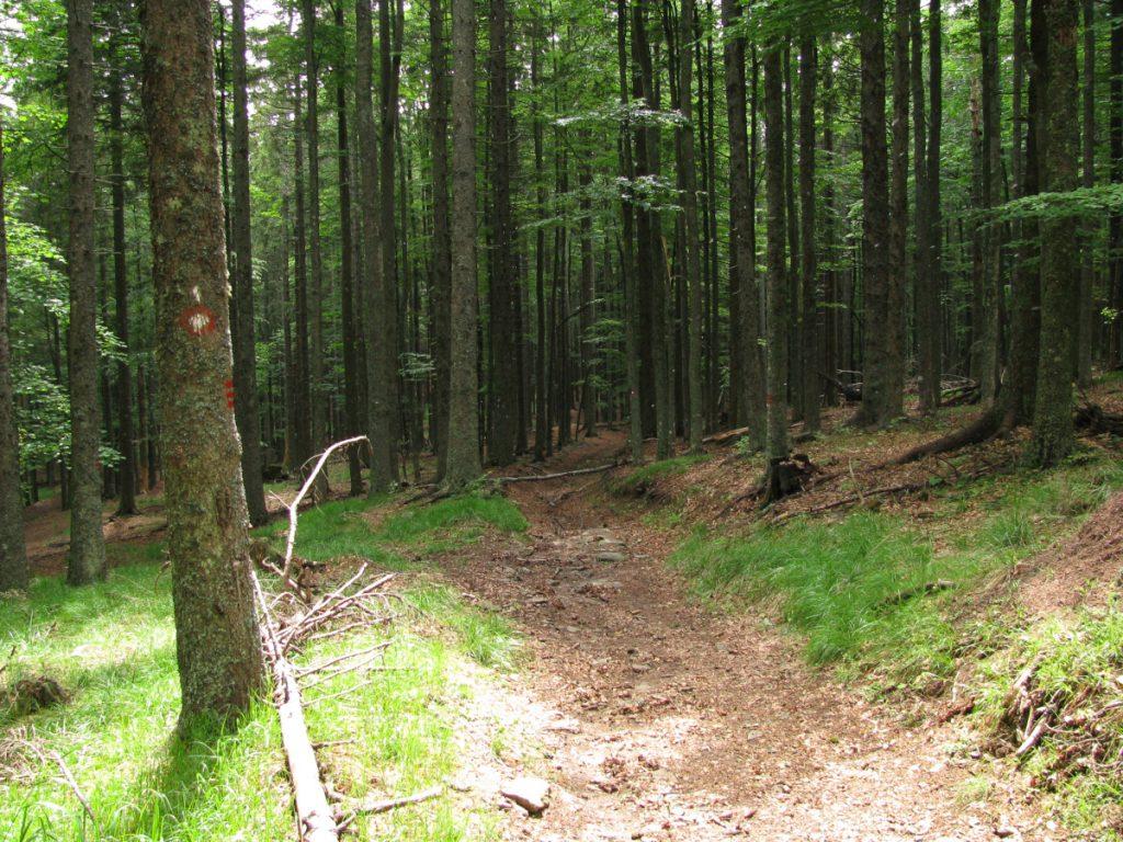 Slovenska Planinska Pot, Osankarica / Foto: breki74 [CC BY-SA 2.0] Wikimedia Commons