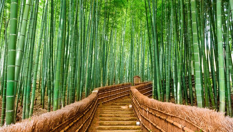 Travesia-pirenaica-Sagano-Japon-BY-Halconviajes.com