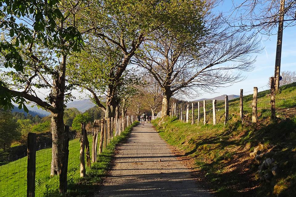 Camino del caserío de Cardelsoro