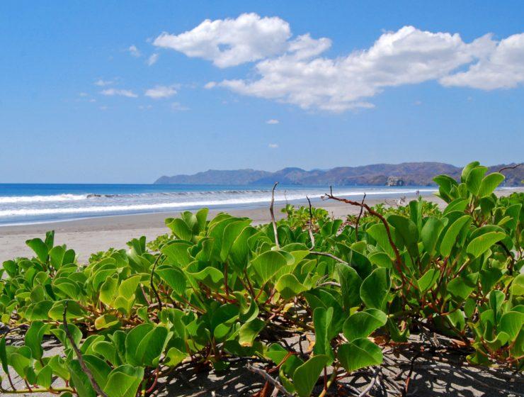 Parque Nacional Santa Rosa, Costa Rica / Foto: Geoff Gallice (CC BY 2.0) Wikimedia Commons