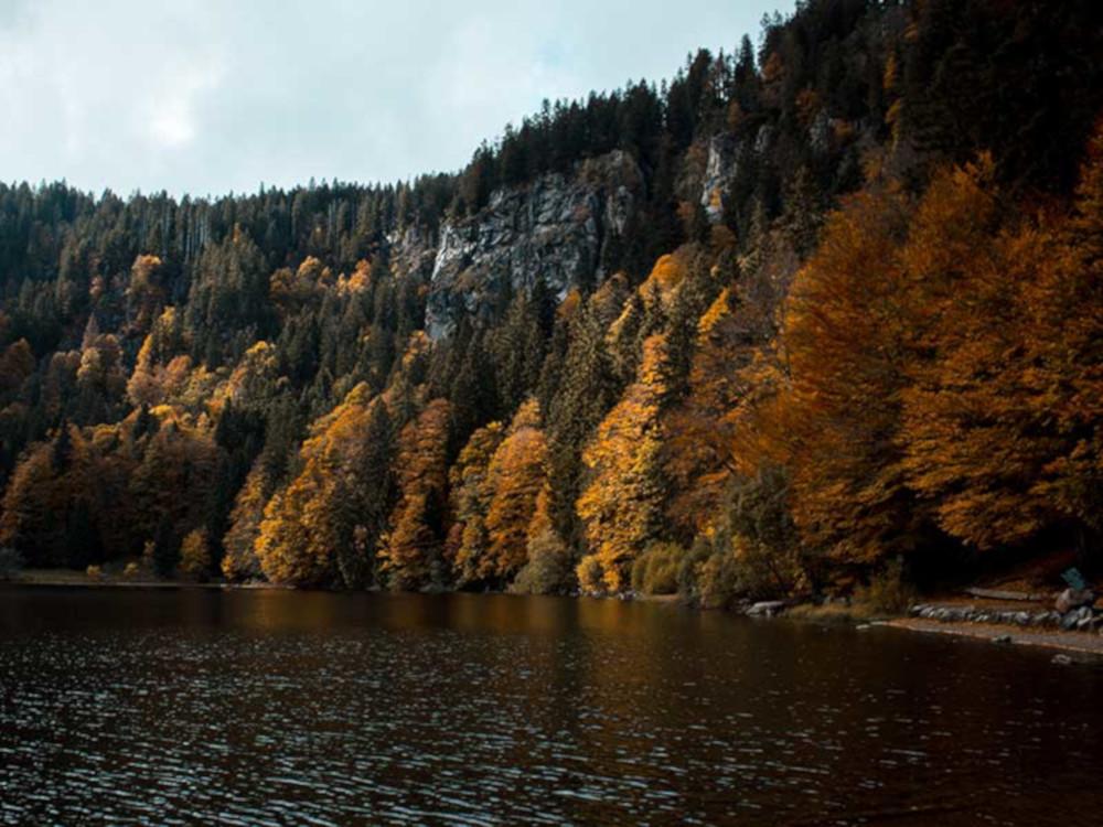 Selva Negra en Alemania / Foto: Max Langelott