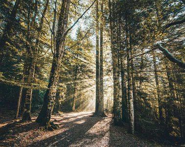 Bosque de las Hayas. Ordesa/ Foto: @rubenamores_ y @carloslloris