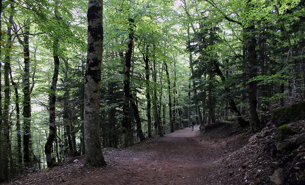Bosque de las Hayas// Foto 'Ana y Paco Sancho' (Flickr)