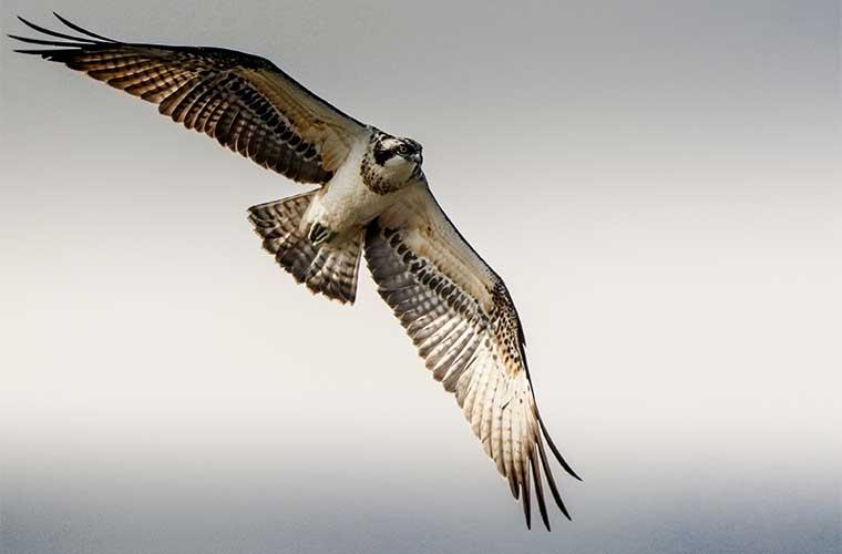 Disfruta con la observación de aves en el Pirineo