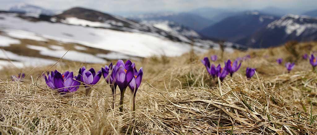 El arte del mundo natural: flores de montaña en Pirineos