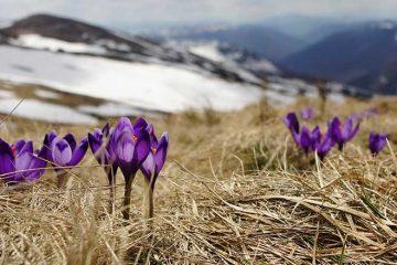 Flores de montaña en Pirineos: belleza natural en climas montañosos / Foto: Biegun Wschodni