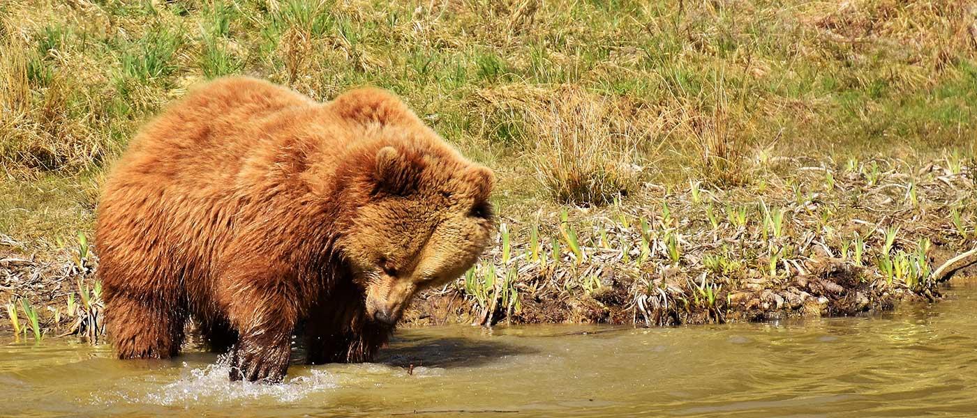 Mamíferos en los Pirineos: refugio para la fauna salvaje