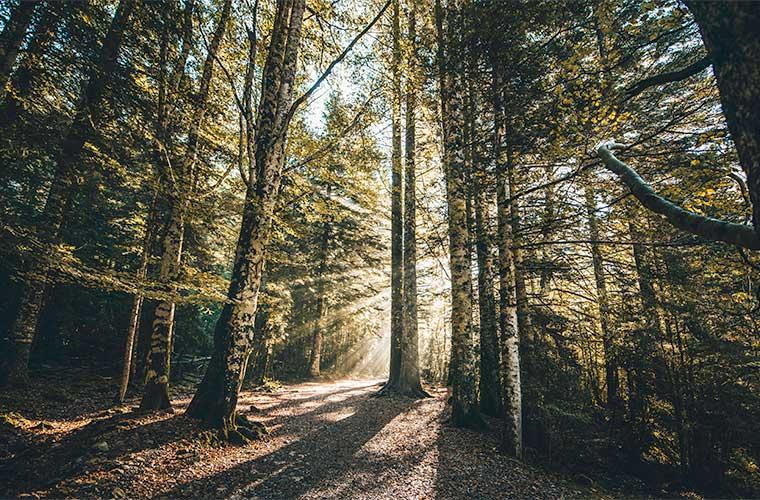 Bosque de las Hayas en Ordesa / FOTO: RUBÉN AMORES / CARLOS LLORIS @rubenamores_ / @carloslloris