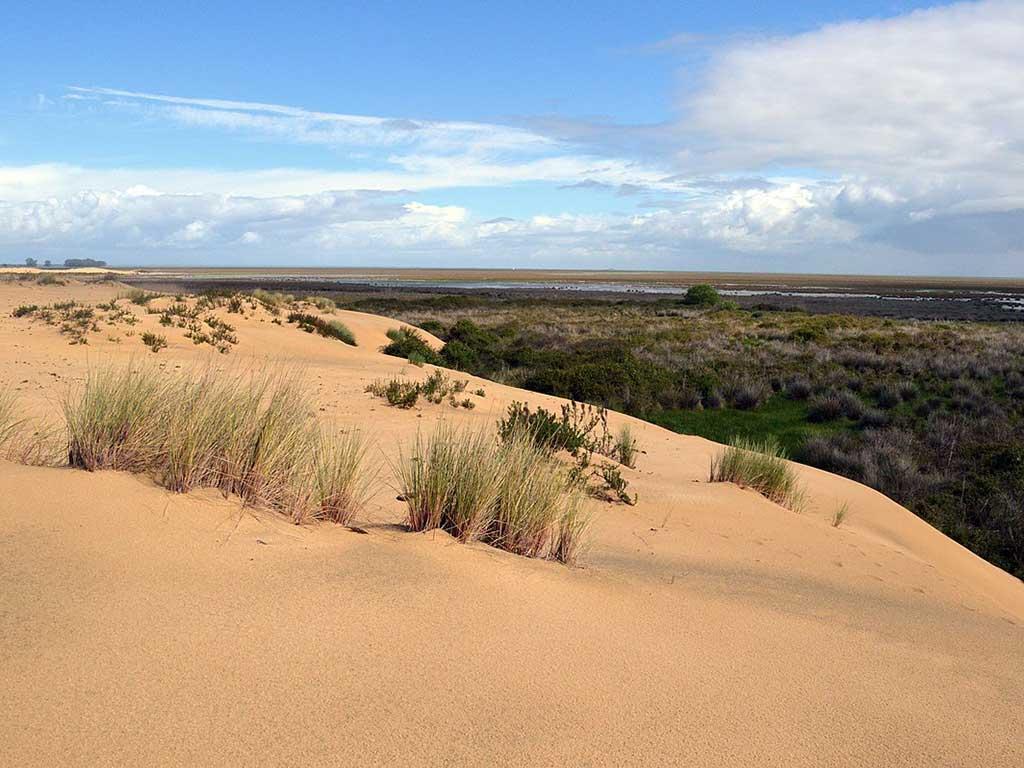Foto (cc): Gabriela Coronado Hernández (wikimedia commons)/ Bosque debajo de las dunas del Parque Nacional de Doñana