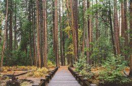 Senderismo y mindfulness: consejos para caminar practicando la atención plena / Foto: Andrew Ridley