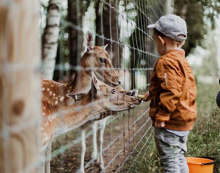 Senderismo con niños: sorprende a tu hijo / Foto: Daiga Ellaby