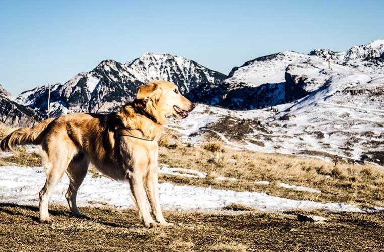 Senderismo con perros / Foto: Filippo Andolfatto