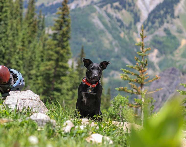 Senderismo con perros / Foto: Patrick Hendry