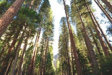 Cómo la ciencia demuestra el beneficio mental de vivir cerca de un bosque / Foto: Chelsea Bock
