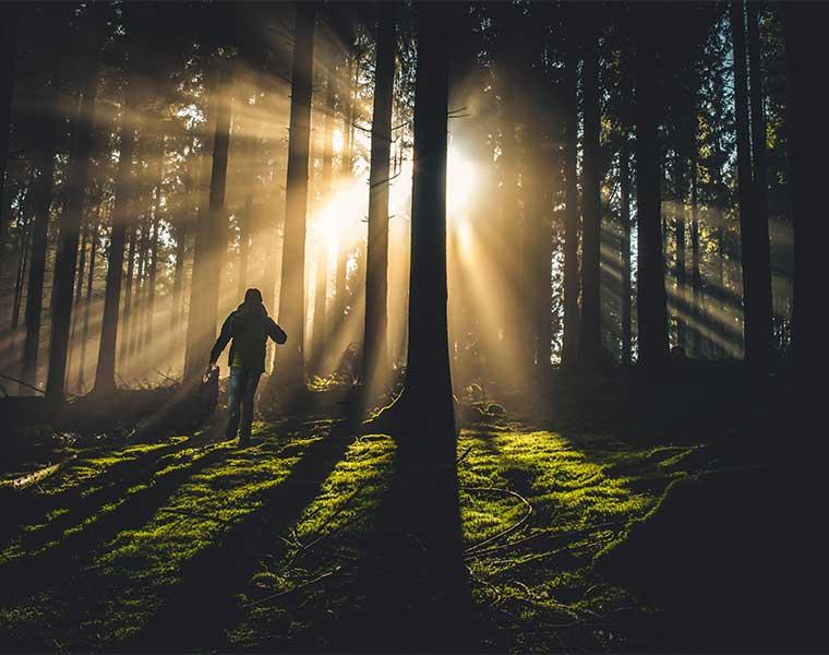 Los bosques reduce el riesgo de depresión / Foto: Kiwihug
