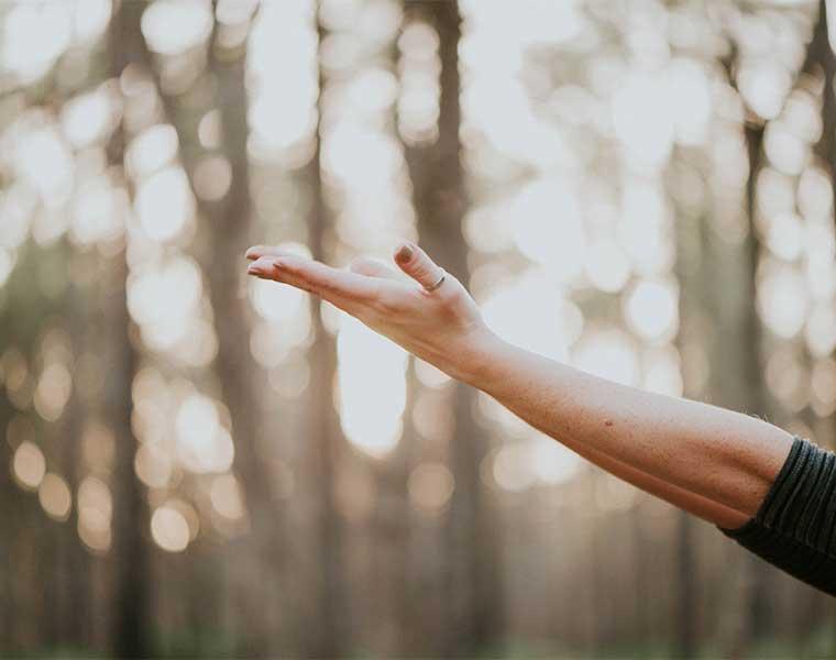 Los bosques ayudan a neutralizar el estrés / Foto: Natalie Collins