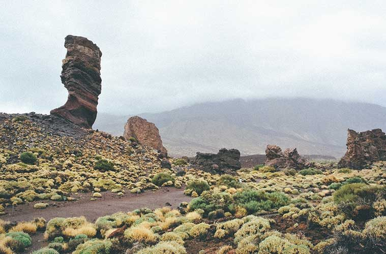 Por qué Tenerife puede ser tu viaje para descubrir flora y fauna / Foto: Greg Rochat