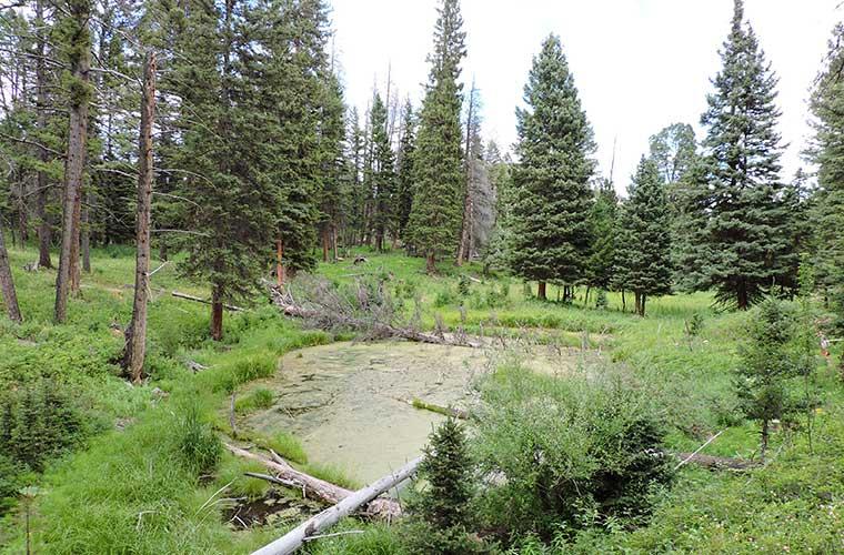 Beavers Pond Trail / Foto: halfuur (Wikimedia Commons)
