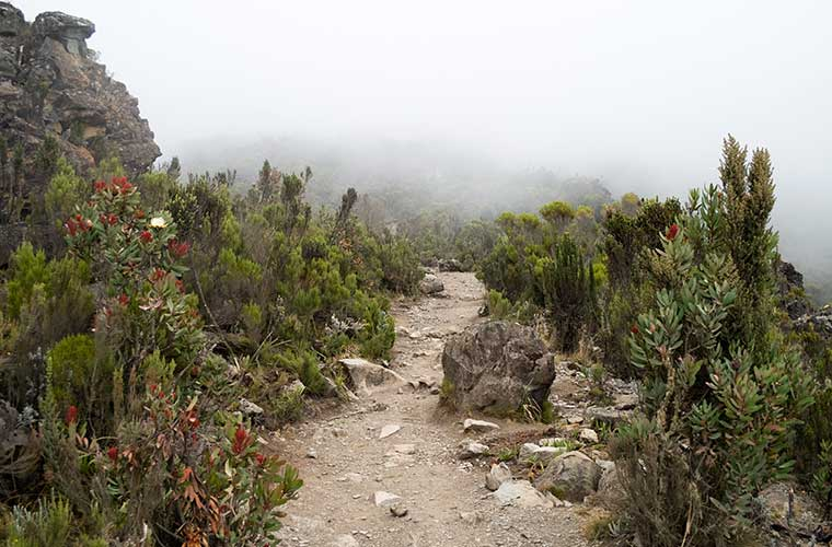 Vegetación del Kilimanjaro / Foto: Stig Nygaard (Wikimedia Commons)