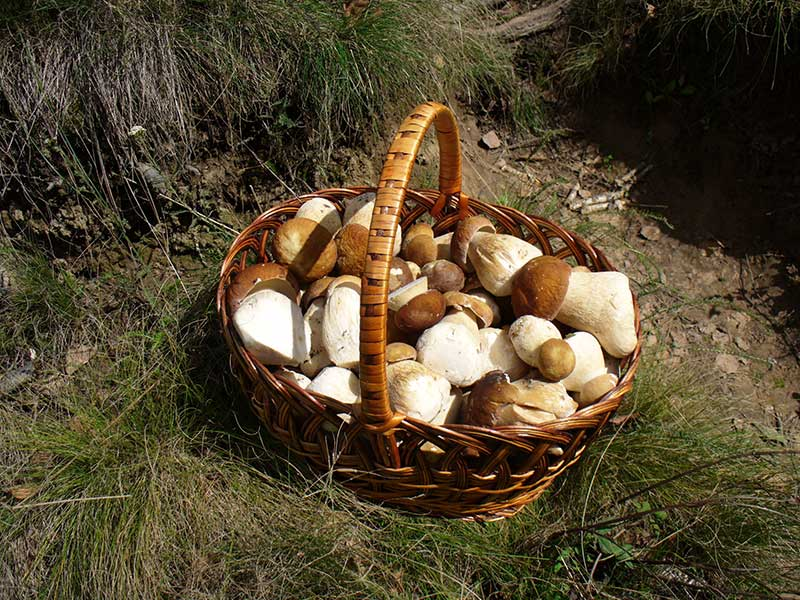 Hongos recogidos en la Selva de Irati / Foto: George Chernilevsky