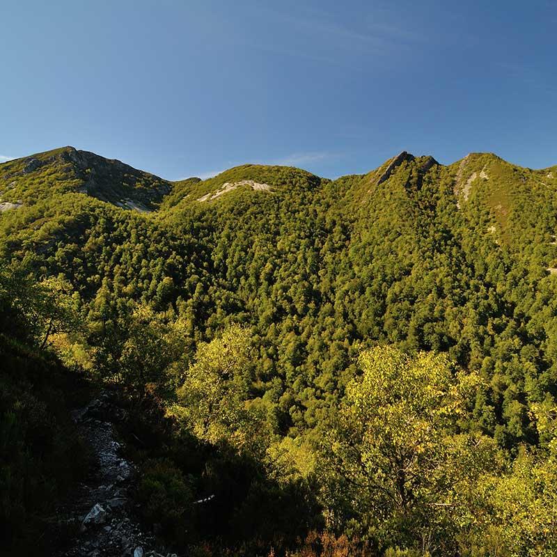 Bosque de Muniellos / Foto: Javier Pérez (CC-BY-SA-3.0)