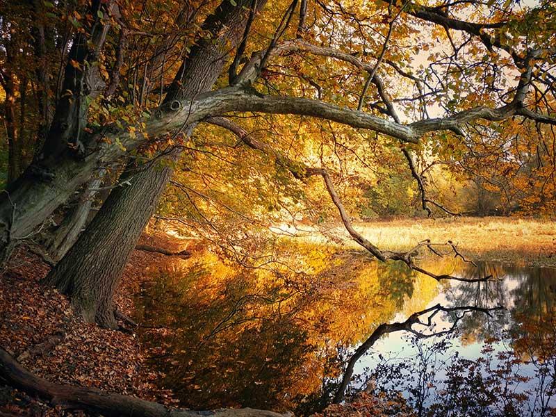 Fotografía otoño: ¿a qué hora? / Foto: Isabella Christina