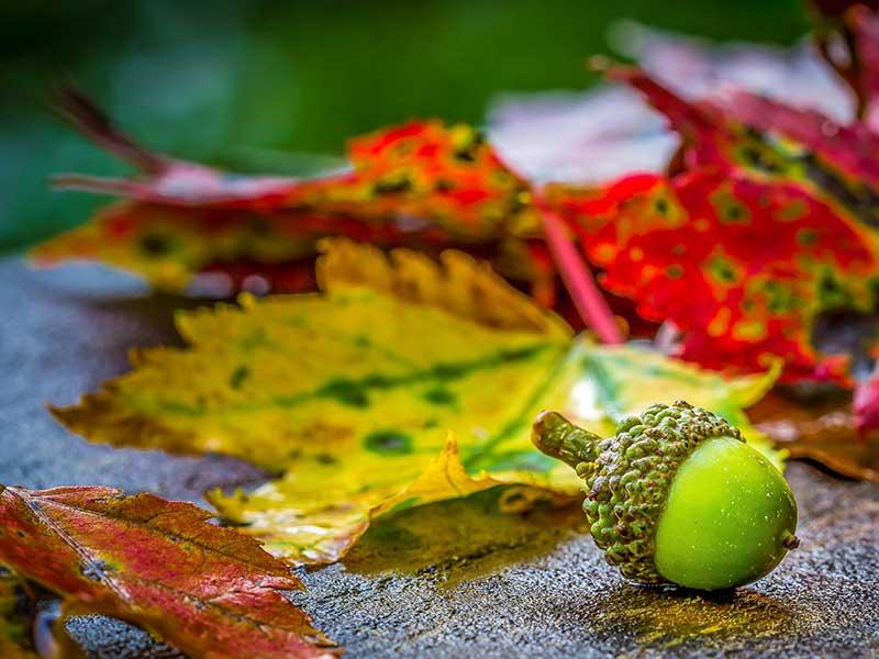 Fotografía otoño: añade color verde a tu fotografía / Foto: Alfred Schrock