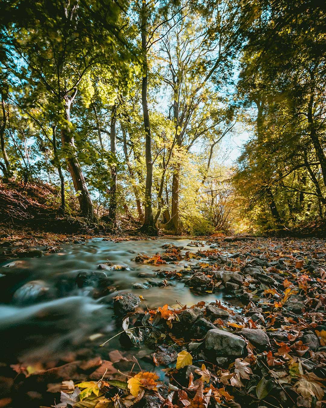 Fotografía otoño: experimenta-con-la-velocidad-de-obturación / Foto: Niklas Hamann