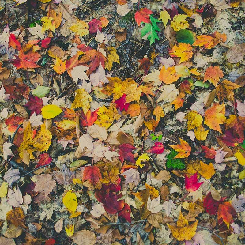 Fotografía otoño: utiliza un filtro circular polarizador / Foto: Kelly Sikkema