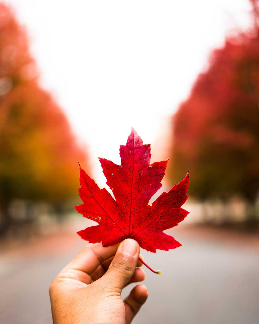 Fotografía otoño: elige el objetivo adecuado / Foto: Aj Gallagher