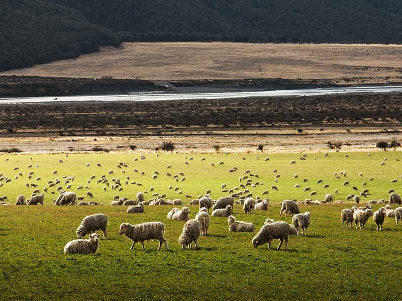 Ropa de lana merino / Foto: Martin Bisof (unsplash)