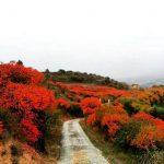 Bosque de Zumaques en Estella-Lizarra, Ruta del Zumaque / Foto: Vitori Vidaurre