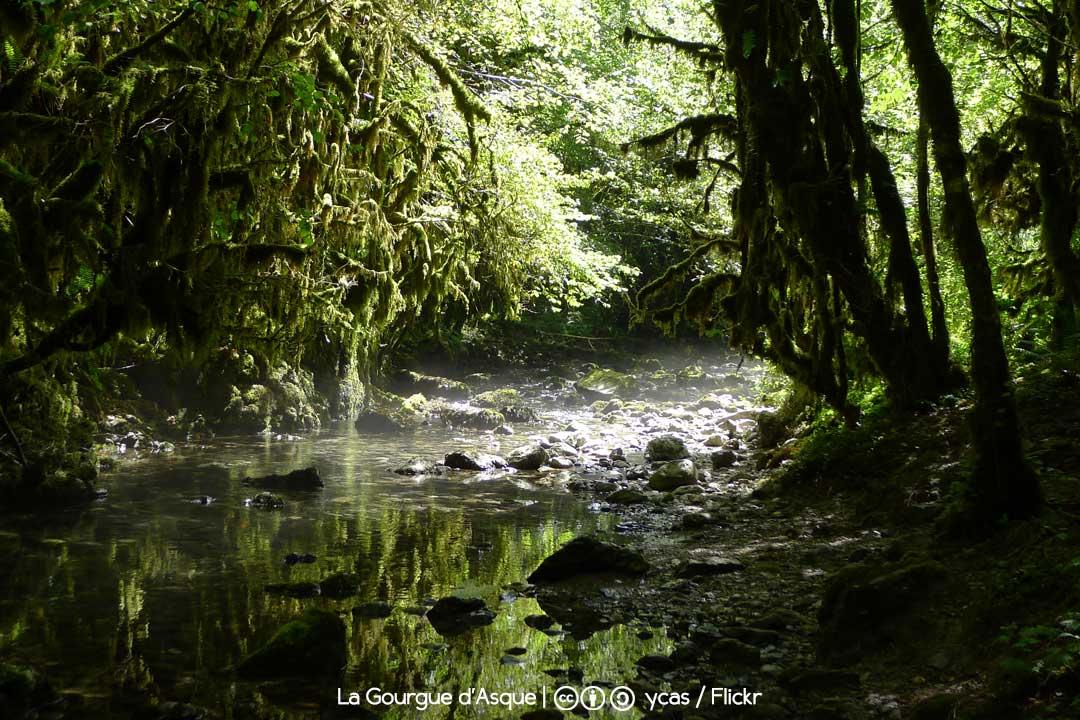 La petite Amazonie / Foto: ycas (Flickr)